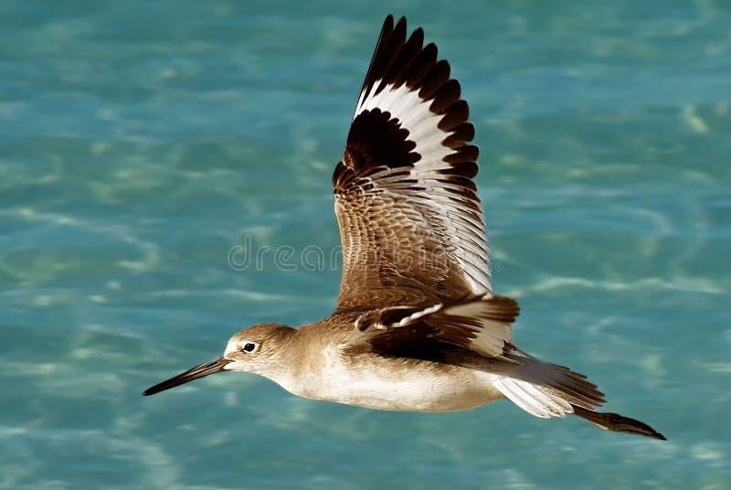 flygseabird royaltyfria foton