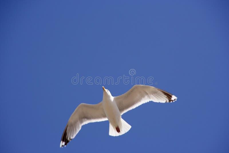 Download Flygseagull upp fotografering för bildbyråer. Bild av fluga - 233875
