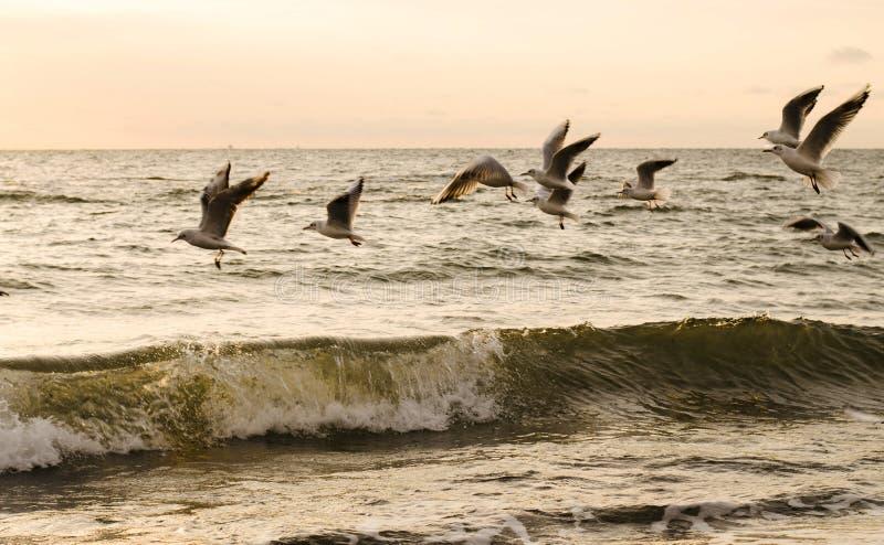 Flygseagulls på havet royaltyfria foton