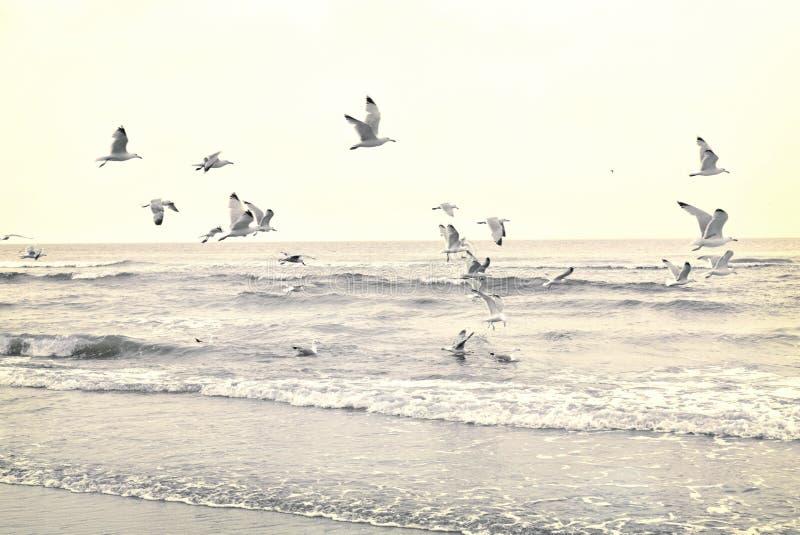 Flygseagulls på stranden royaltyfria foton