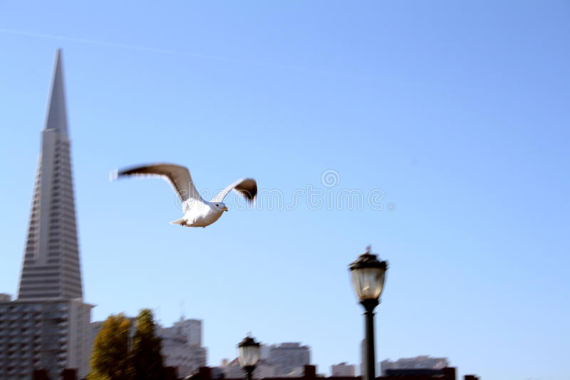 Flying stock photography