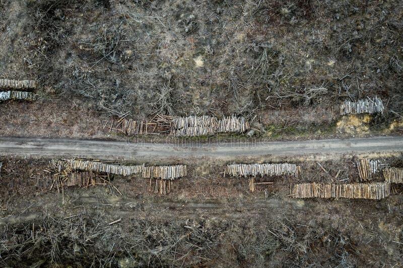 Flying above horrible deforestation, destroyed forest for harvesting, Poland. Europe stock photos
