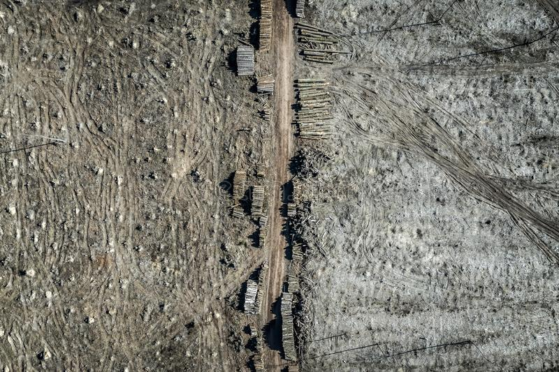 Flying above terrible deforestation, destroyed forest for harvesting. Europe royalty free stock photos