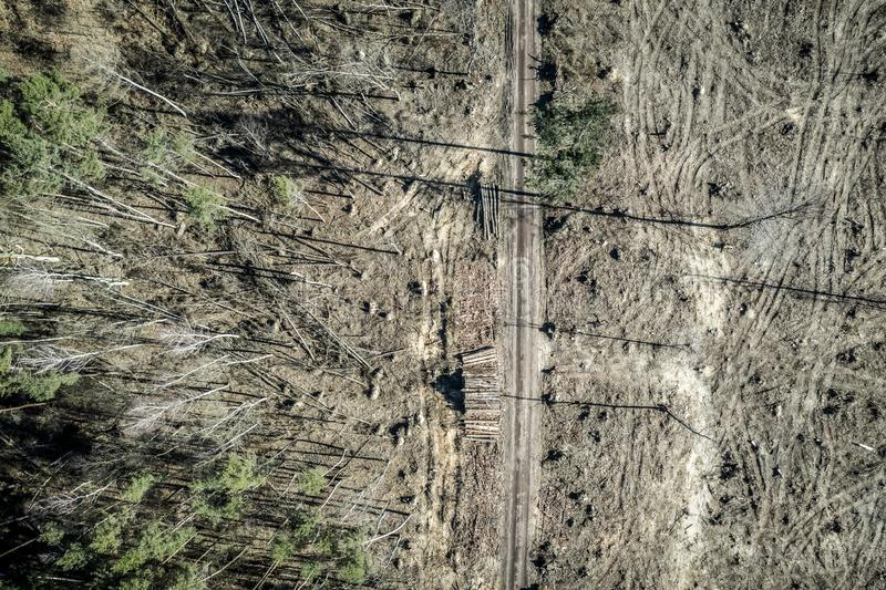 Flying above terrible deforestation, logging, environmental destruction, Poland. Europe royalty free stock photo