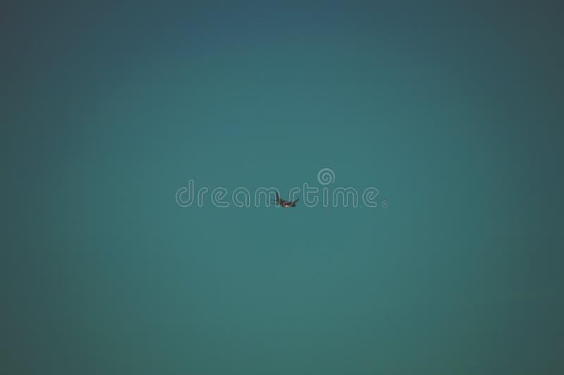 Flying Aircraft stock photo