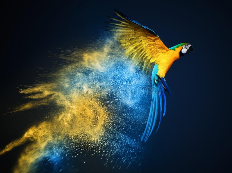 Flying Ara parrot. Over colourful powder explosion stock image