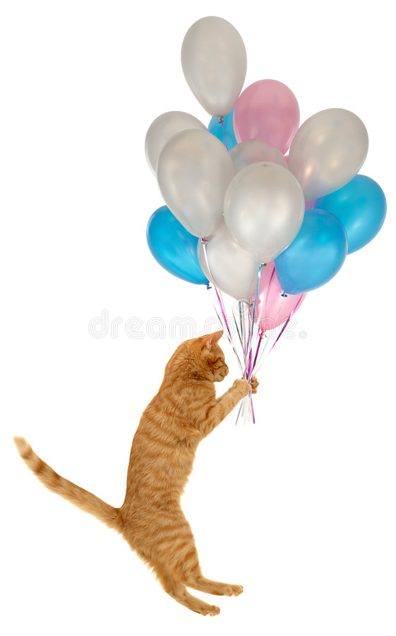 Free Flying Balloon Cat Stock Image - 2401721