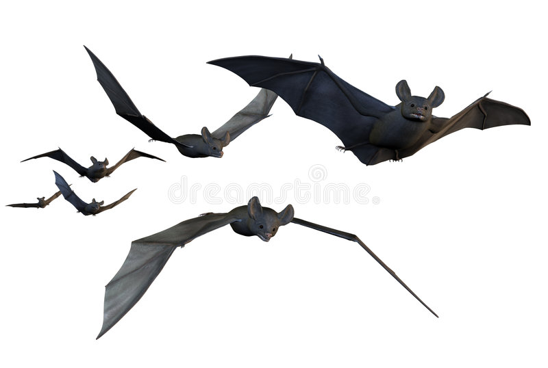 Flying Bats - Includes Clipping Path Royalty Free Stock Photos