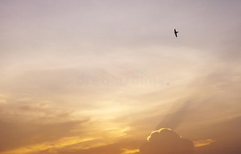 Flying bird in the air and evening sky. royalty free stock photo