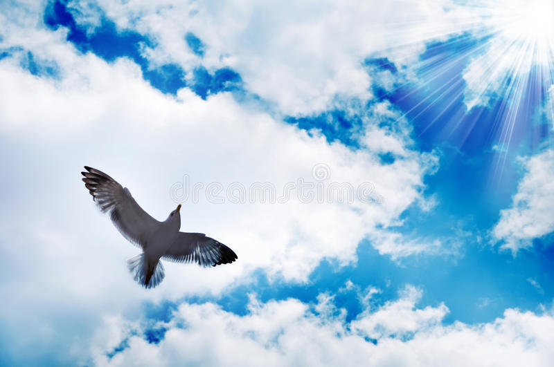 Flying bird and blue sky. Flying bird opposite blue sky and sunny beams royalty free stock photography