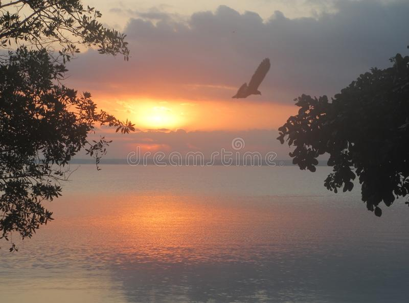 Flying bird at sunset. A flying bird at sunset over the lake royalty free stock image