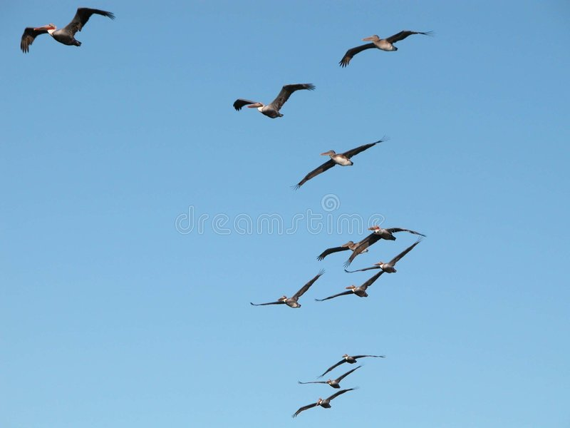 Flying Birds. On a blue sky stock images