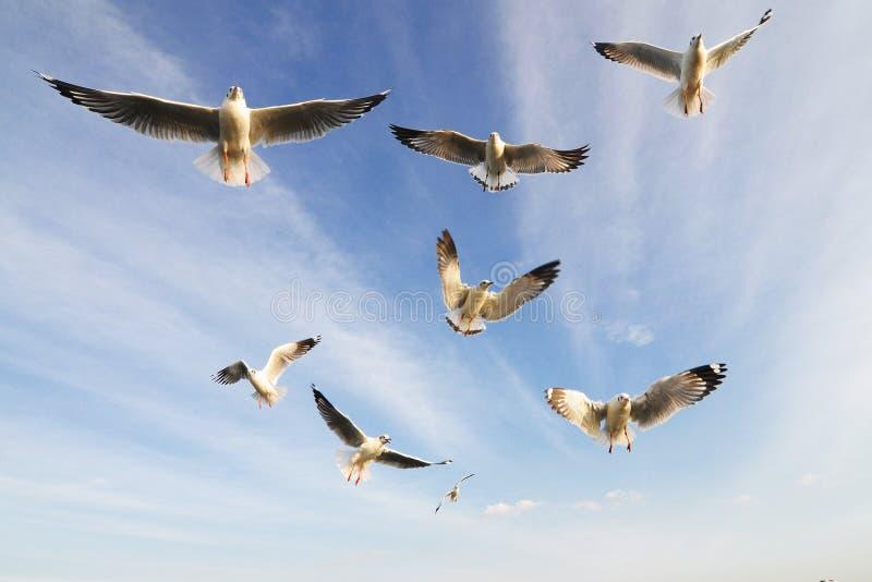 Flying birds. In blue sky stock image