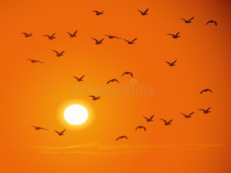 Flying birds against orange sunset stock illustration