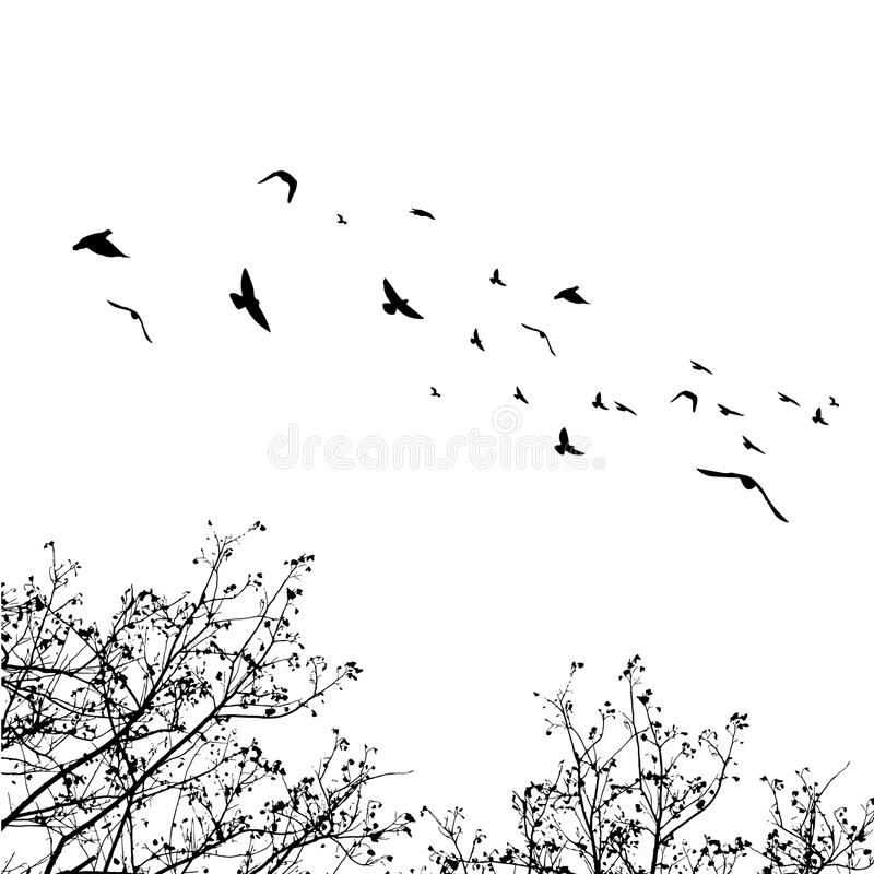 Flying birds and branch silhouettes on white background. Vector royalty free stock photography