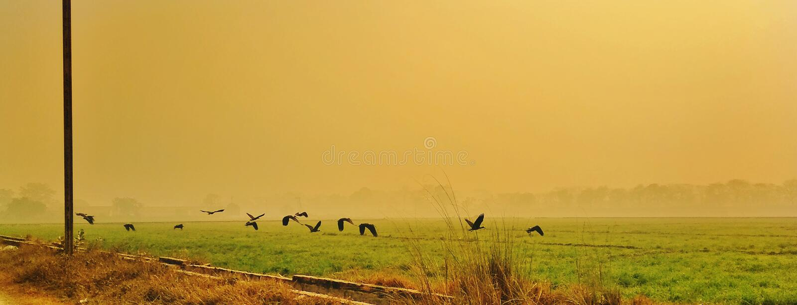 Flying birds. Over an agricultural land in a morning royalty free stock images