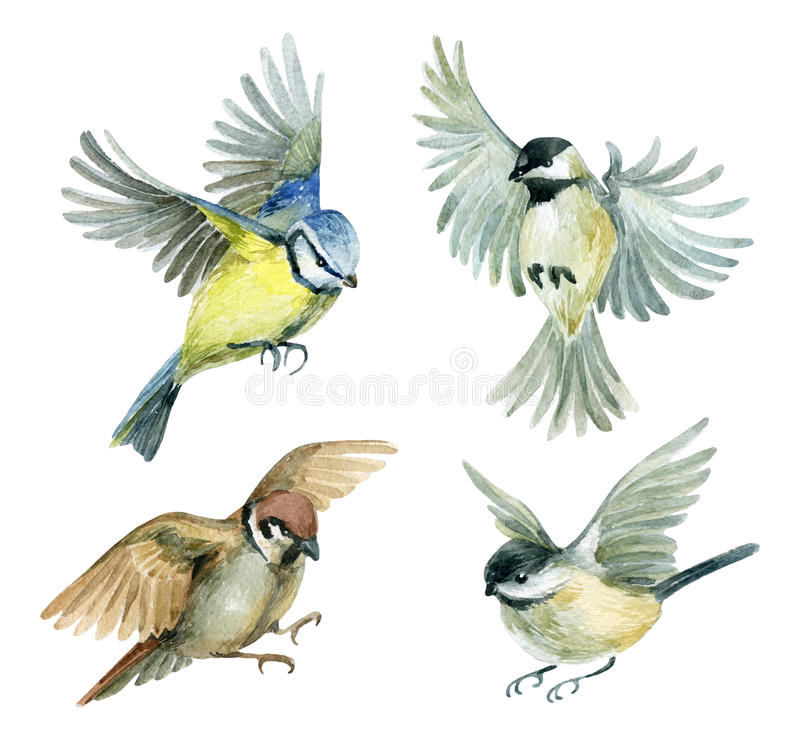 Flying birds set. Watercolor birds - sparrow, titmouse and chickadee. Hand painted illustration on white background vector illustration