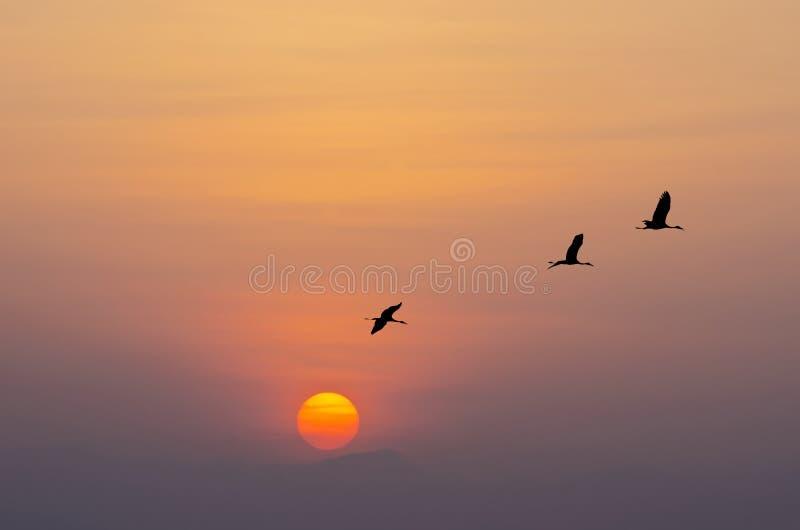 Flying birds sihouette. Flying birds against orange sunset royalty free stock image