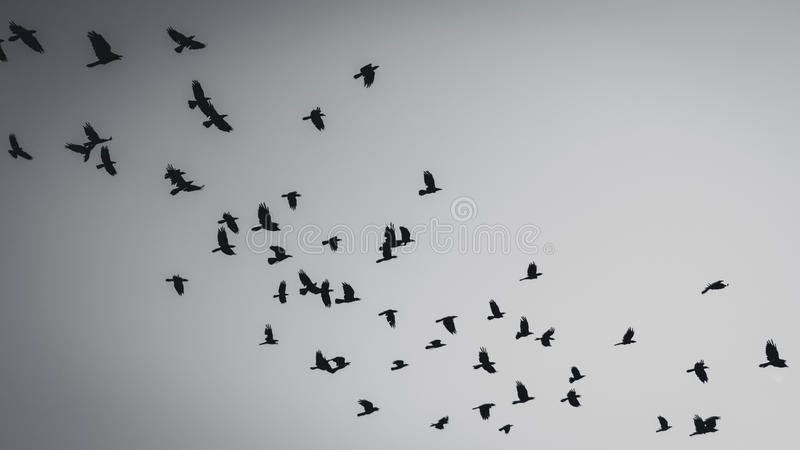 Flying birds silhouette royalty free stock image