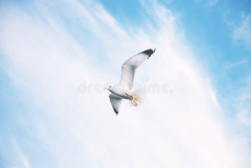 Flying birds in the sky stock image