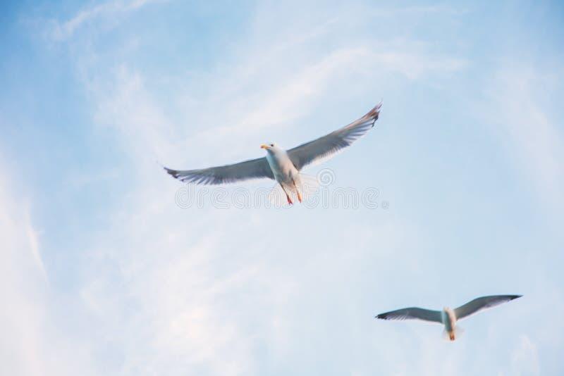 Flying birds in the sky stock photo