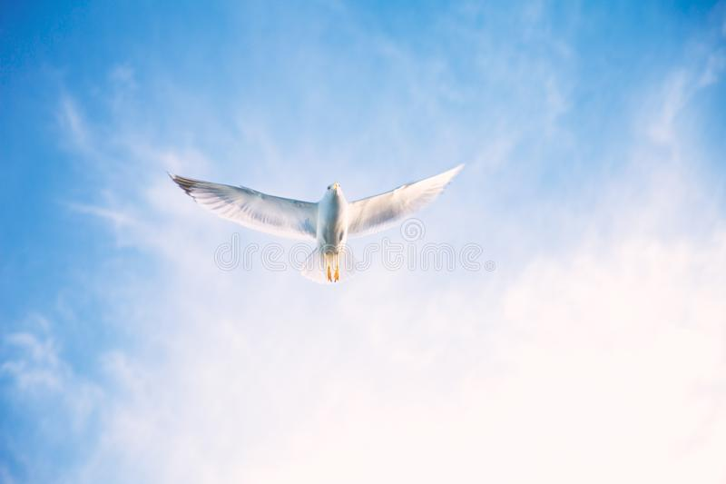 Flying birds in the sky royalty free stock image
