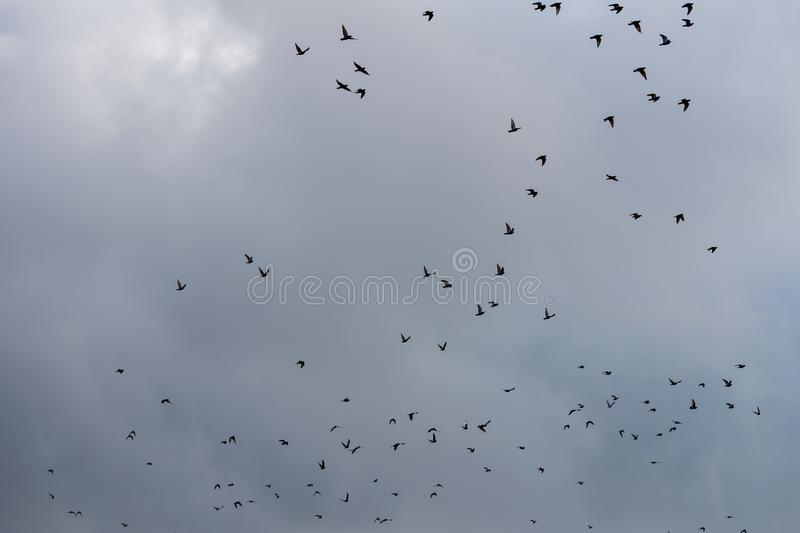 Flying birds on the sky. Black silhouettes and shapes against the bright sky. Migration of birds on the fall royalty free stock photography