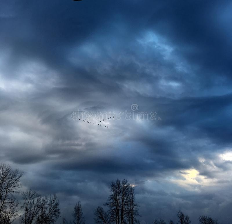 Flying birds in the sky royalty free stock photography