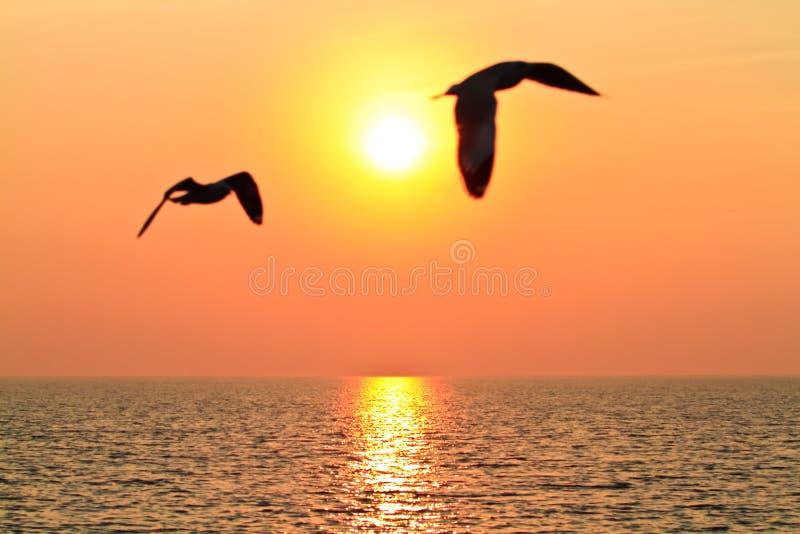 Download Flying birds with sunset stock image. Image of orange - 17277725