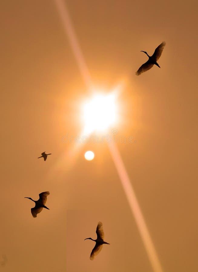 Flying birds with sunset on the bird Sanctuary. Flying birds with sunset on the vaduvoor Bird Sanctuary landscape-tamilnadu,india stock photo