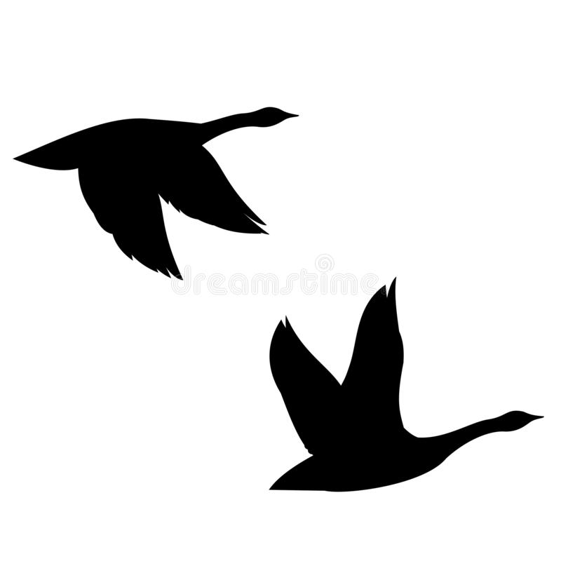 Flying Canada Geese Silhouette stock photography