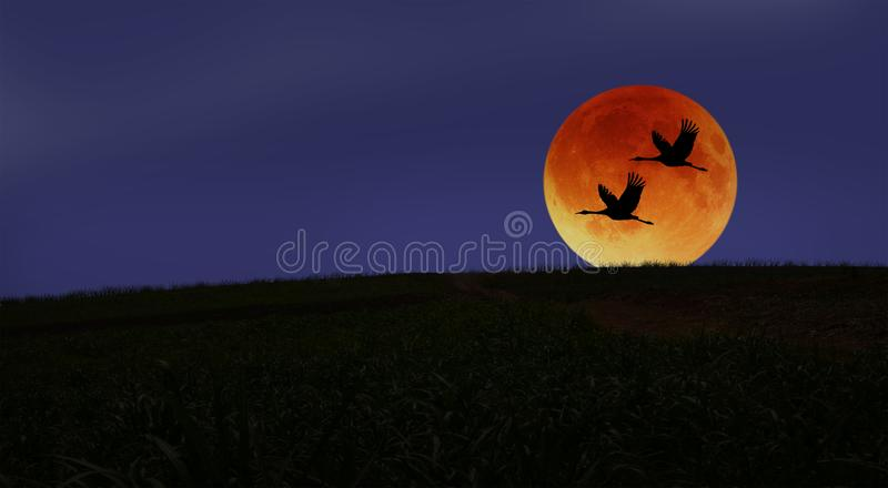 Couple cranes fly through the red moon in the evening stock photography