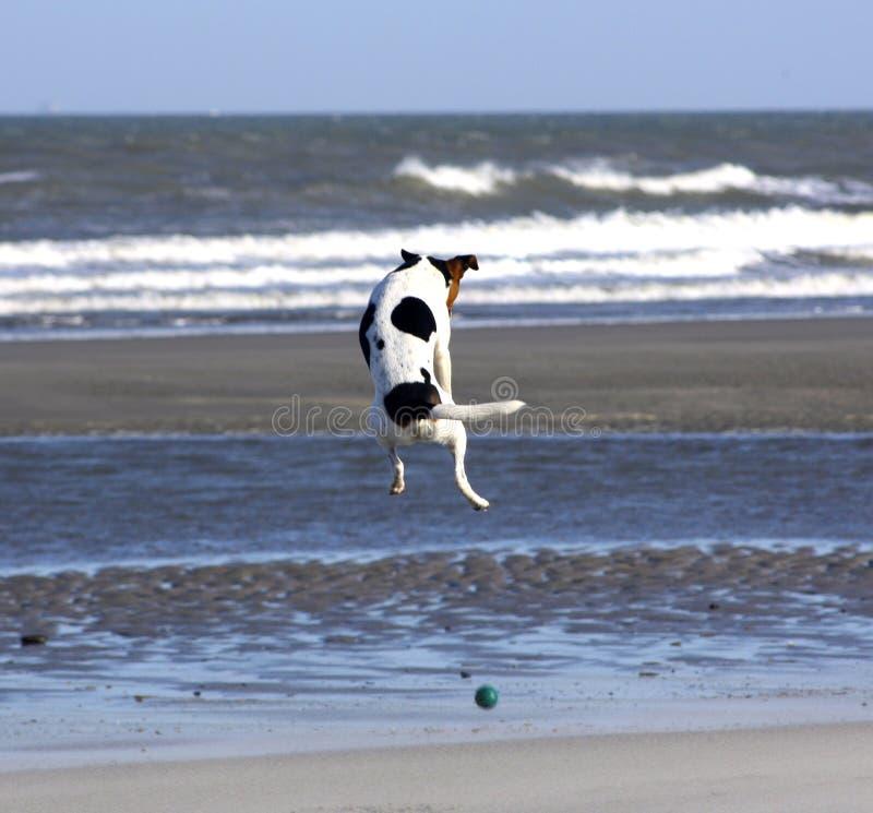 Flying dog royalty free stock photography