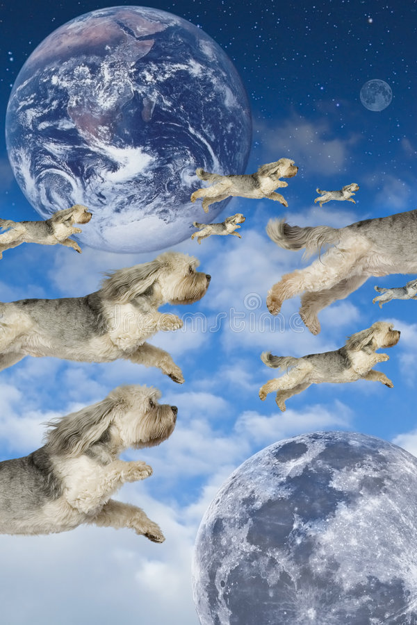 Flying Dogs. Flock of dogs flying thru imaginary atmosphere royalty free stock photos