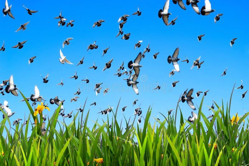 Flying doves stock photo