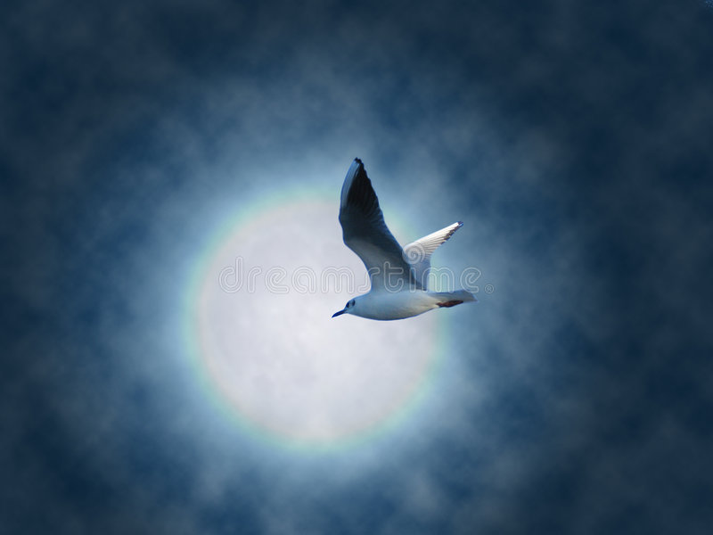 Flying dream. Seagull flying on moon light background royalty free stock photos