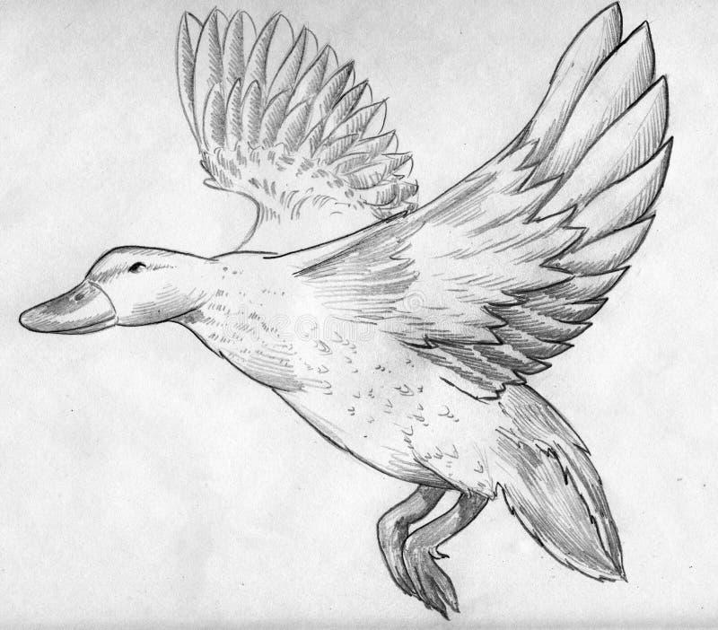 Download Flying duck sketch stock illustration. Illustration of sketch - 43460443
