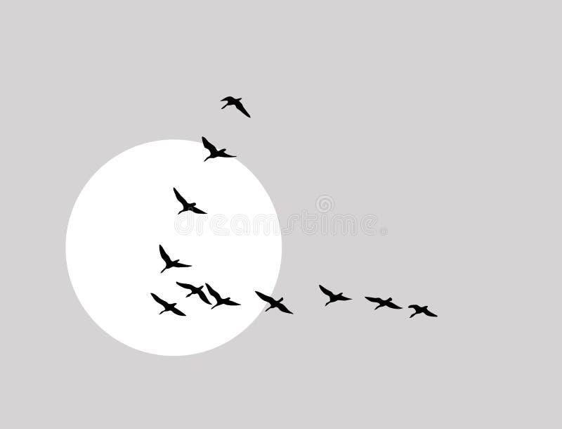 Flying ducks silhouette royalty free illustration