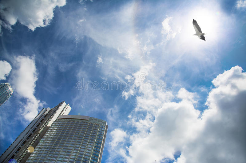 Flying eagle and commercial building. Flying eagle and finance building royalty free stock photos