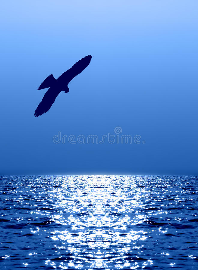 Flying eagle over water reflecting sunlight stock images