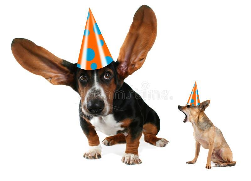 Download Flying Ears Stock Image - Image: 12293321