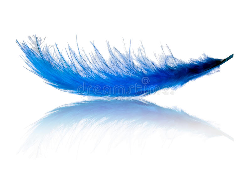 Flying feather stock photo