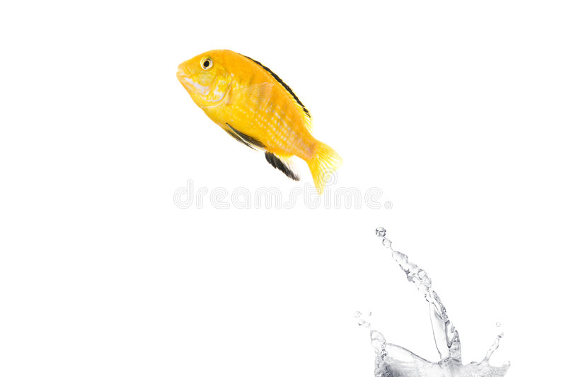 Flying fish royalty free stock photography