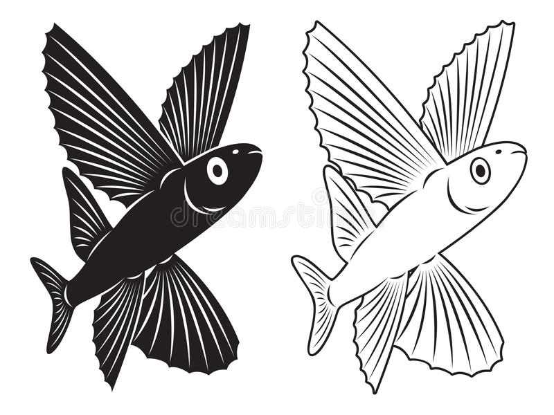 Download Flying fish stock image. Image of isolated, nature, rolls - 30569639