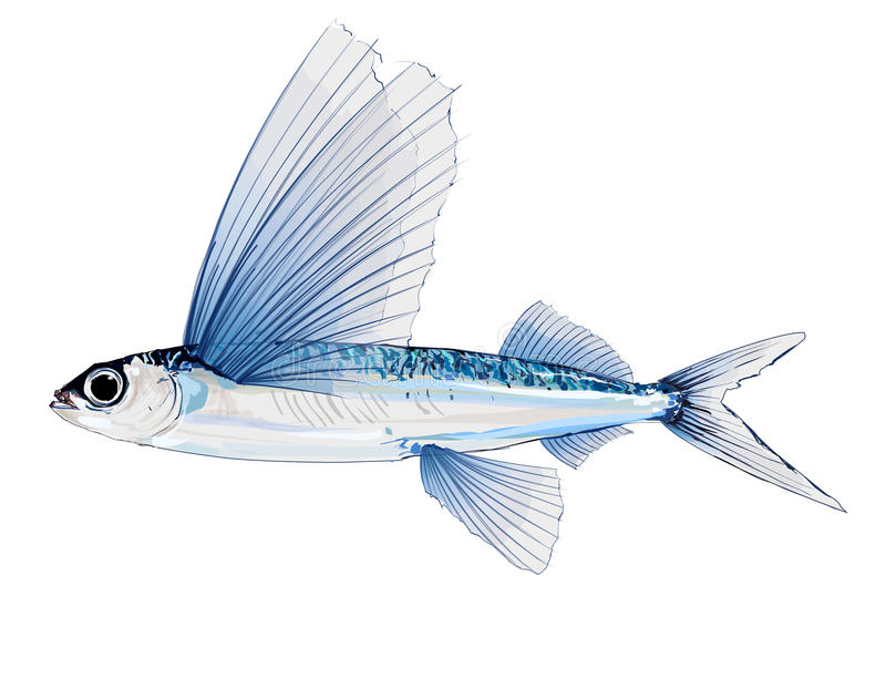 Flying fish in watercolor stock illustration