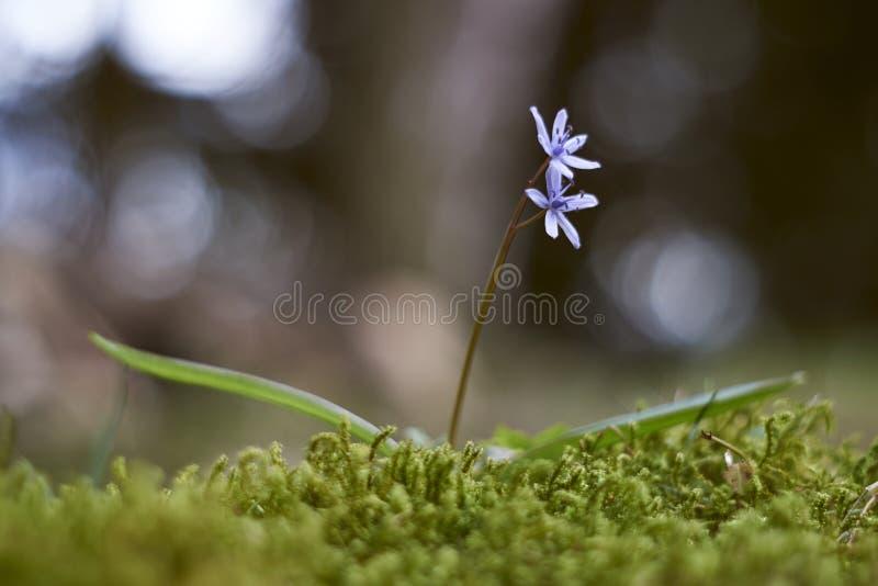 Flying flower stock photo