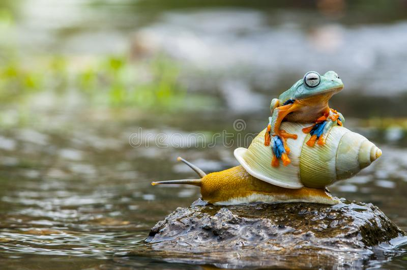 Flying frog up the slug. Snails stock photos