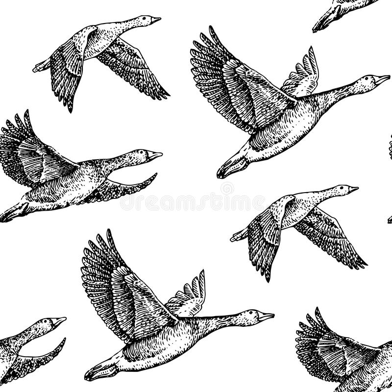 Free Flying Geese Royalty Free Stock Photo - 50000915