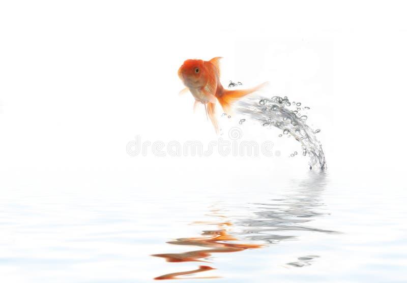 Flying golden fish