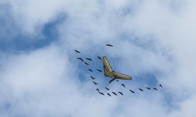 Flying hang gliders with a stork flock stock photo